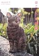 ほころび時間 フェルトアートの小猫たち (2)