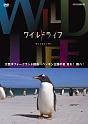 ワイルドライフ 大西洋 フォークランド諸島 ペンギン王国の夏 走れ!跳べ!