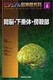 間脳・下垂体・傍鞍部 ビジュアル脳神経外科6