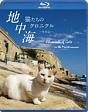 地中海・猫たちのクロニクル