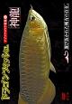 趣味癒し系DVD ドラゴンフィッシュ(神龍)特集 1 アジアアロワナ特集1 改訂版