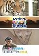 『ムツゴロウのゆかいな動物図鑑』 シリーズ 「ネコ科の大型動物」 「ネコのルーツと不思議」