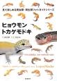 ヒョウモントカゲモドキ 見て楽しめる爬虫類・両生類フォトガイドシリーズ