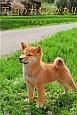 天国の犬ものがたり〜ラストレター〜