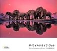 ザ・ワイルドライフ・フォト Wildlife Photographer of