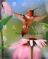 世界の美しい飛んでいる鳥 Flying Birds Flying Beaut