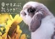 幸せをよぶ花うさぎ