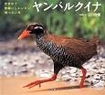 ヤンバルクイナ 世界中で沖縄にしかいない飛べない鳥