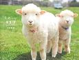 たのしいまきば Cute Farm Animals