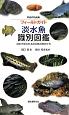 フィールドガイド 淡水魚 識別図鑑 日本で見られる淡水魚の見分け方