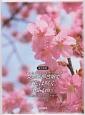 女声三部合唱で「花は咲く」「桜ノ雨」-特選!ベストソング集- CD付