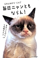 毎日ニャンともならん! 世界でいちばん不機嫌なネコ