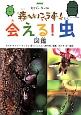 NHK モリゾー・キッコロ 森へいこうよ!会える!虫図鑑