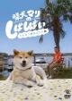 柴犬マリのしばしばい~1人と1匹のコント集~