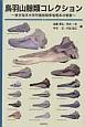 鳥羽山鯨類コレクション ~東京海洋大学所蔵鯨類骨格標本の概要~