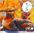 ぽっちゃり猫 カレンダー 壁掛け 2015
