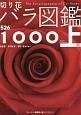 切り花 バラ図鑑1000(上) レッド ピンク バイカラー