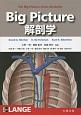 Big Picture解剖学