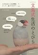 文鳥式生活のとびら 入手方法から生活環境、グッズ、遊ばせ方まで。