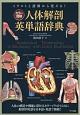 カラー図解 人体解剖英単語辞典 イラストと語源から覚える!