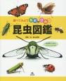 昆虫図鑑 調べてみよう名前のひみつ
