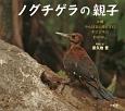 ノグチゲラの親子 沖縄やんばるの森にすむキツツキのおはなし