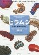 ヒラムシ 水中に舞う海の花びら ネイチャーウォッチングガイドブック 特徴がひと目でわかる各種ヒラムシの図解付き