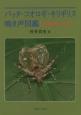 バッタ・コオロギ・キリギリス鳴き声図鑑 日本の虫しぐれ