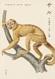 サル その歴史・文化・生態