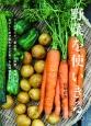 野菜を使いきる。 ジャーサラダ、重ね煮、干し野菜、野菜ブロス…。おい