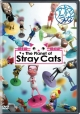 (TR限)The Planet of Stray Cats