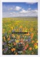 ソプラノ・リコーダーで/「ひまわりの約束」「花は咲く」 CD・かんたんメロディー付 ベスト・ヒット・ソング特集