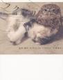 フクマリ フクロウと子猫