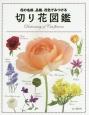 切り花図鑑 花の名前、品種、花色でみつける