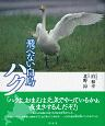 飛べない白鳥ハク