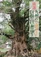 厳選九州の巨樹・巨木巡り入門ガイド