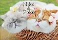 Niko&Poko
