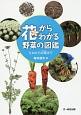 花からわかる野菜の図鑑 たねから収穫まで