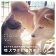 柴犬フクと猫のタラ。 自然の中で2匹が織りなすのんびりな日々