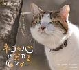 ネコの心が分かるカレンダー 2017