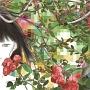 メーデー(DVD付)