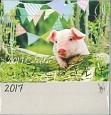 こぶたとおさんぽ Lucky Pig Calendar 2017
