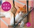 世界の街角猫~トルコ~カレンダー 2017
