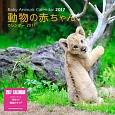 動物の赤ちゃんカレンダー