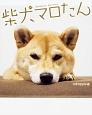 柴犬マロたん