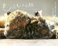もふもふ日誌~仔トラと仔ライオン、ときどきウサギ~