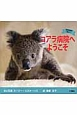 コアラ病院へようこそ 野生動物を救おう!