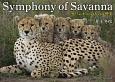 Symphony of Savanna サバンナ いのちの交響楽