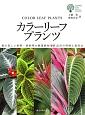 カラーリーフプランツ ガーデンライフシリーズ 葉の美しい熱帯・亜熱帯の観葉植物547品目の特徴と
