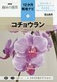 コチョウラン NHK趣味の園芸 12か月栽培ナビ3